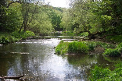 River Blyth at the Free Woods